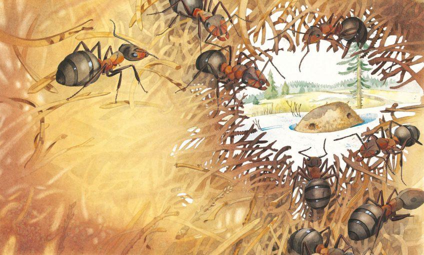 Dessin dans une fourmilière