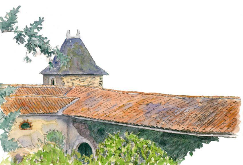 De nombreux oiseaux peuplent les toits