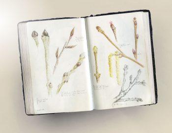 Double page de carnet naturaliste consacrée…