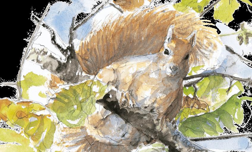 écureuil : 3 conseils pour l'observer facilement près de chez vous