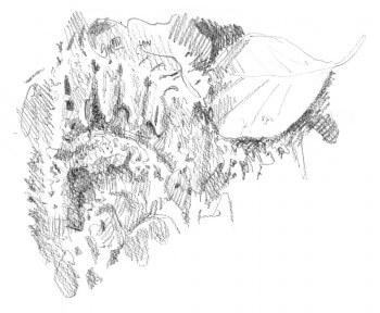 dessin d'empreinte de blaireau