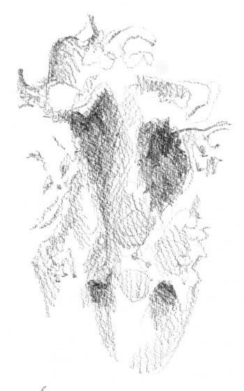 dessin d'empreinte de chevreuil