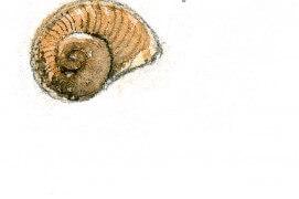 « Escargot (7 mm) » / © Benoît Perrotin