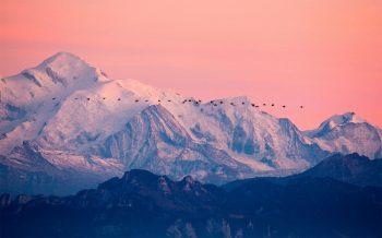 Grues cendrées (Grus grus) en vol migratoire. Depuis la Dent de Vaulion (Jura vaudois), 27octobre2009, 18h36.