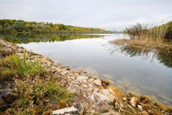 Il y a encore 100 ans, les tilleuls cordata de cette forêt de feuillus étaient utilisés pour tresser des cordages pour la Marine nationale.