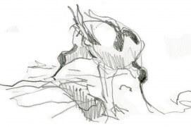 Immédiatement reconnaissable à son bec recourbé, l'avocette élégante utilise celui-ci pour remuer la vase latéralement, en un étonnant geste de fauche, afin de faire remonter en surface les invertébrés aquatiques dont elle se nourrit. / © Denis Clavreul