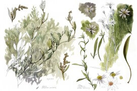La végétation des salines vue par Densi Clavreul (planche complète) / © Denis Clavreul