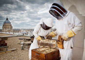 L'apiculture urbaine a le vent en…