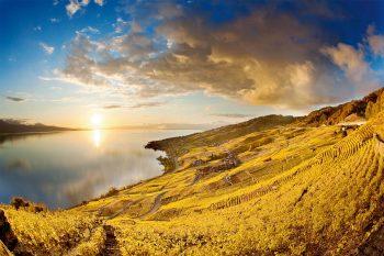 Lavaux éclate de toute sa splendeur dorée en automne.