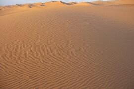 Le milan noir survole les dunes de sable fin africaines pour rejoindre l'Europe après la période d'hivernage. / © Jérôme Gremaud
