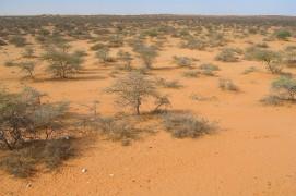 Le Sahel et ses arbustes secs  / © Jérôme Gremaud