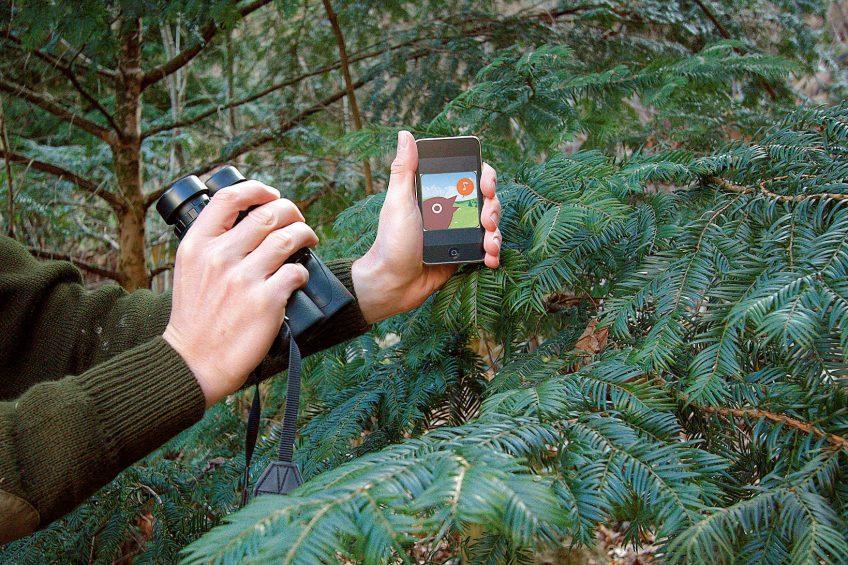 Application smartphone oiseaux