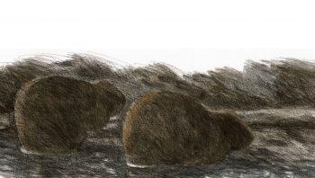 Les castors sont surtout actifs la nuit tombée.
