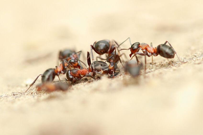 Photo de fourmis