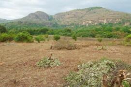 Les milans noirs recherchent les coins verdoyants de la Savanne africaine ou du Sahel pour passer l'hiver. / © Jérôme Gremaud
