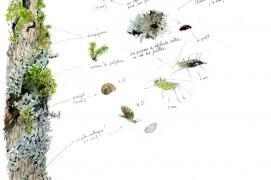 Les nombreux visiteurs de l'érable sycomore profite de l'abondance de nourriture entre les mousses et lichens. / © Benoît Perrotin