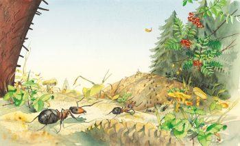Les six espèces de fourmis des…