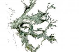 Lichen. « On dirait une algue. » / © Benoît Perrotin