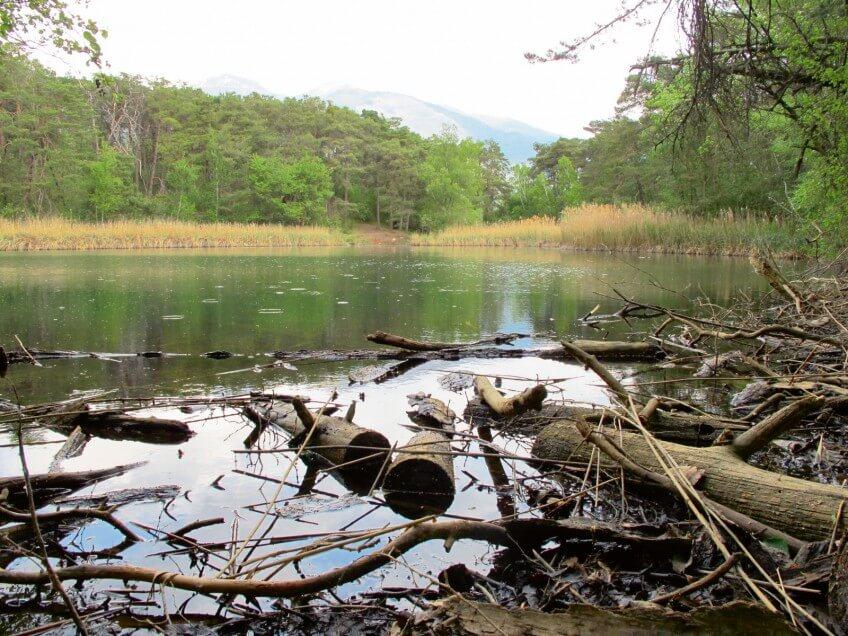 Milieu humide du bois de Finges