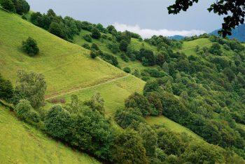 Pâturages et forêts entre la Valle di Muggio et Sasso Gordona