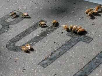 Quand l'art réunit les abeilles et…