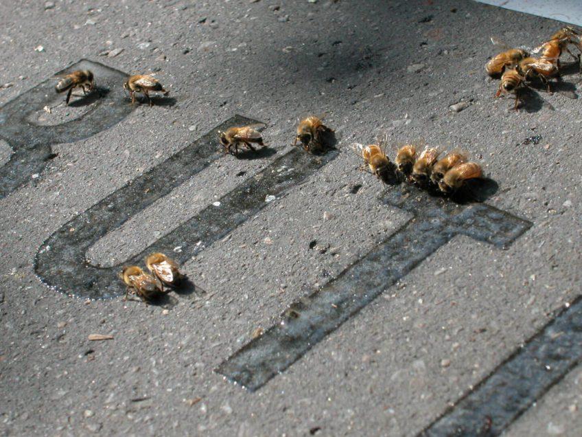 Quand l'art réunit les abeilles et l'urbain