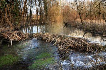Rivière trop petite, débit irrégulier, eau…