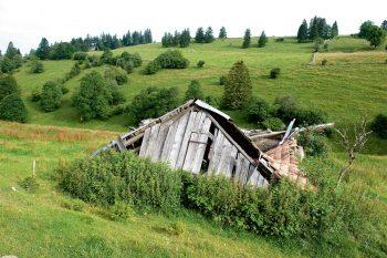 Un pâturage à l'abandon est rapidement conquis par des friches avant de laisser place à la forêt, moins riche en espèces.