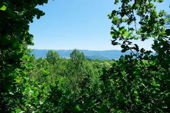 Vue sur les forêts de la réserve naturelle de Lavours, dans l'Ain, depuis le sommet d'un des nombreux arbres étudiés par l'équipe de Fabrice Darinot.