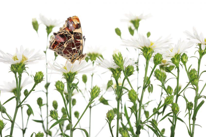 Photo de papillons de Stephane Hette