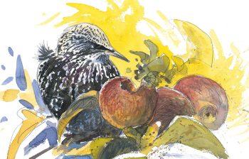 Cet étourneau mange une pomme