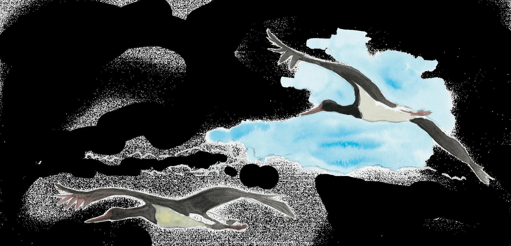Face au donjon de la cigogne noire