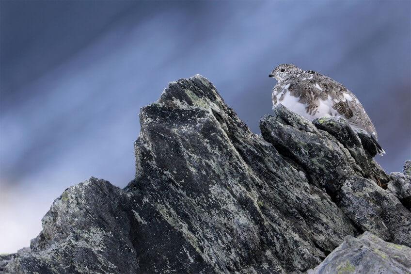 Concours photo 2015 de la Station ornithologique suisse