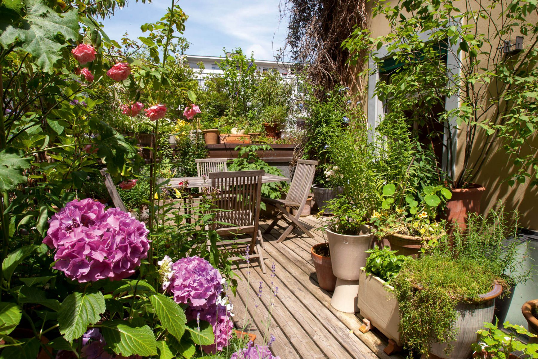 Offrez vous un balcon nature la salamandre - Plante retombante pour balcon ...