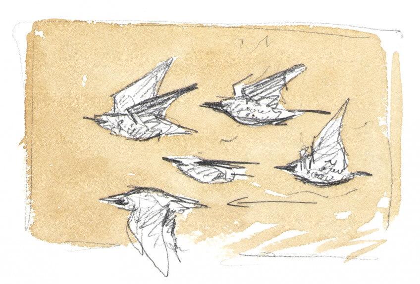 Dessin nature étourneaux en vol