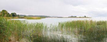 La Baie d'Ostende que l'on découvre depuis la plage de Gletterens est l'un des fleurons de la Grande Cariçaie.