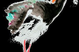 « La cigogne noire s'approche à 15 mètres et cherche des branches pour le nid! » / © Jean-Philippe Paul
