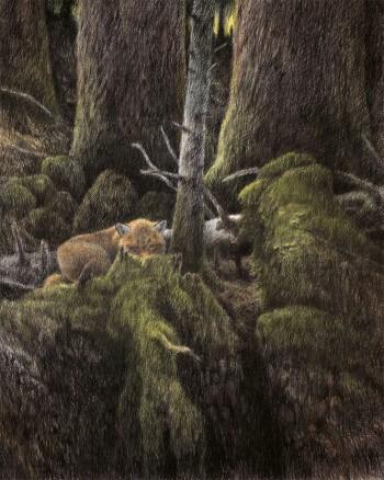 Dessin nature renard