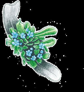 Salade d'hiver à la mâche sauvage