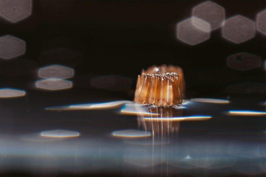 Photo d'œufs de moustiques en train de flotter
