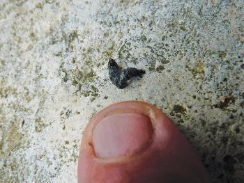Explorez la nature en pleine ville - crotte de chauve-souris