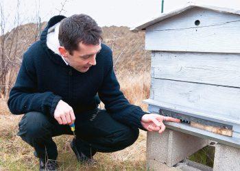 Planter des fleurs sauvages assure un menu diversifié aux  abeilles.
