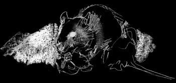 La jeune fille et les rats surmulots