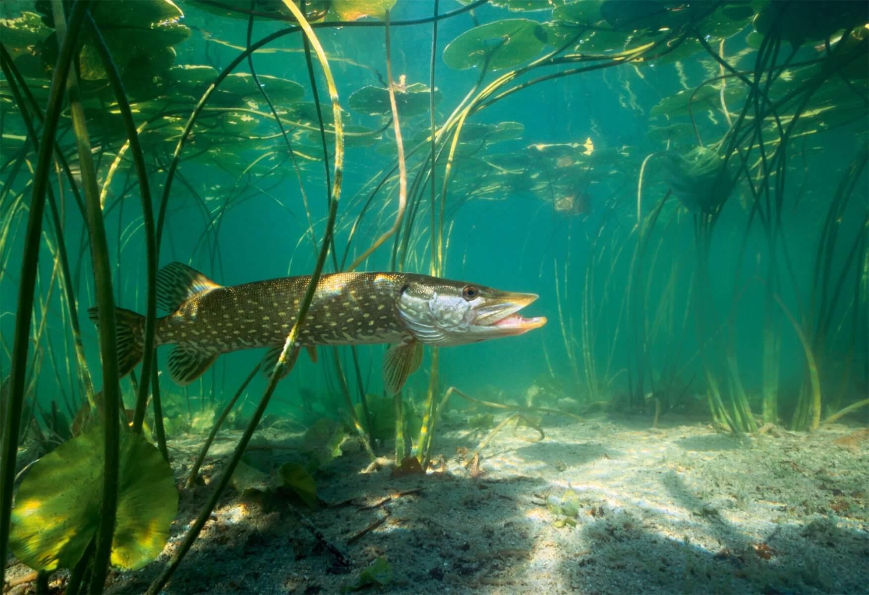 La préparation des vers et oparycha vers la pêche
