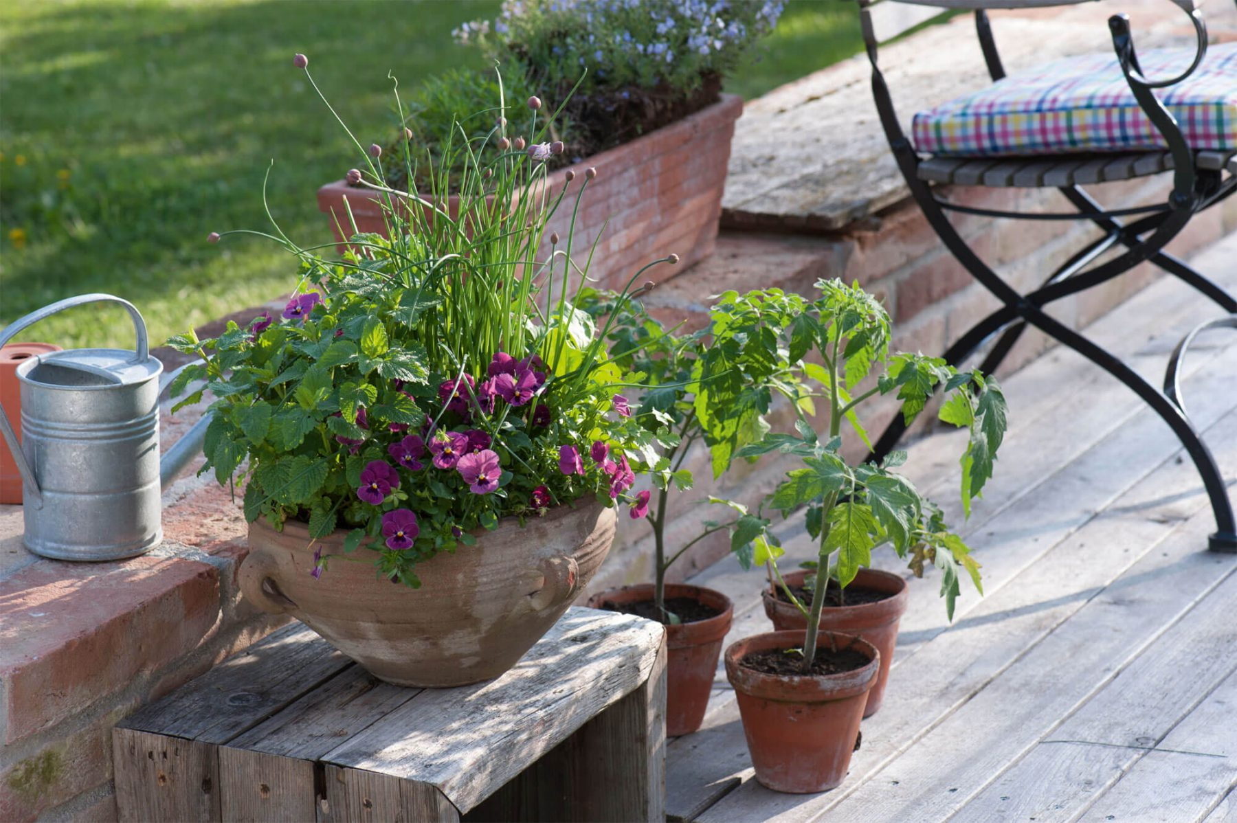 plantes aromatiques balcon good haie brisevue balcon bambou dor aurea en kit with plantes. Black Bedroom Furniture Sets. Home Design Ideas