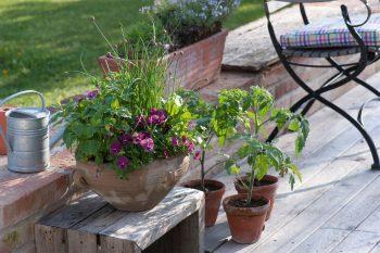 jardin à aromatiques sur une terrasse