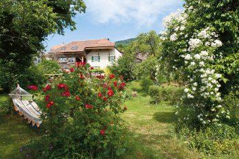 Un jardin abritant des rosiers