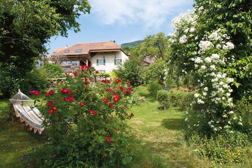 Rosier sauvage jardin