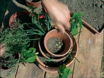 Comment se construire un mini jardin à aromatiques