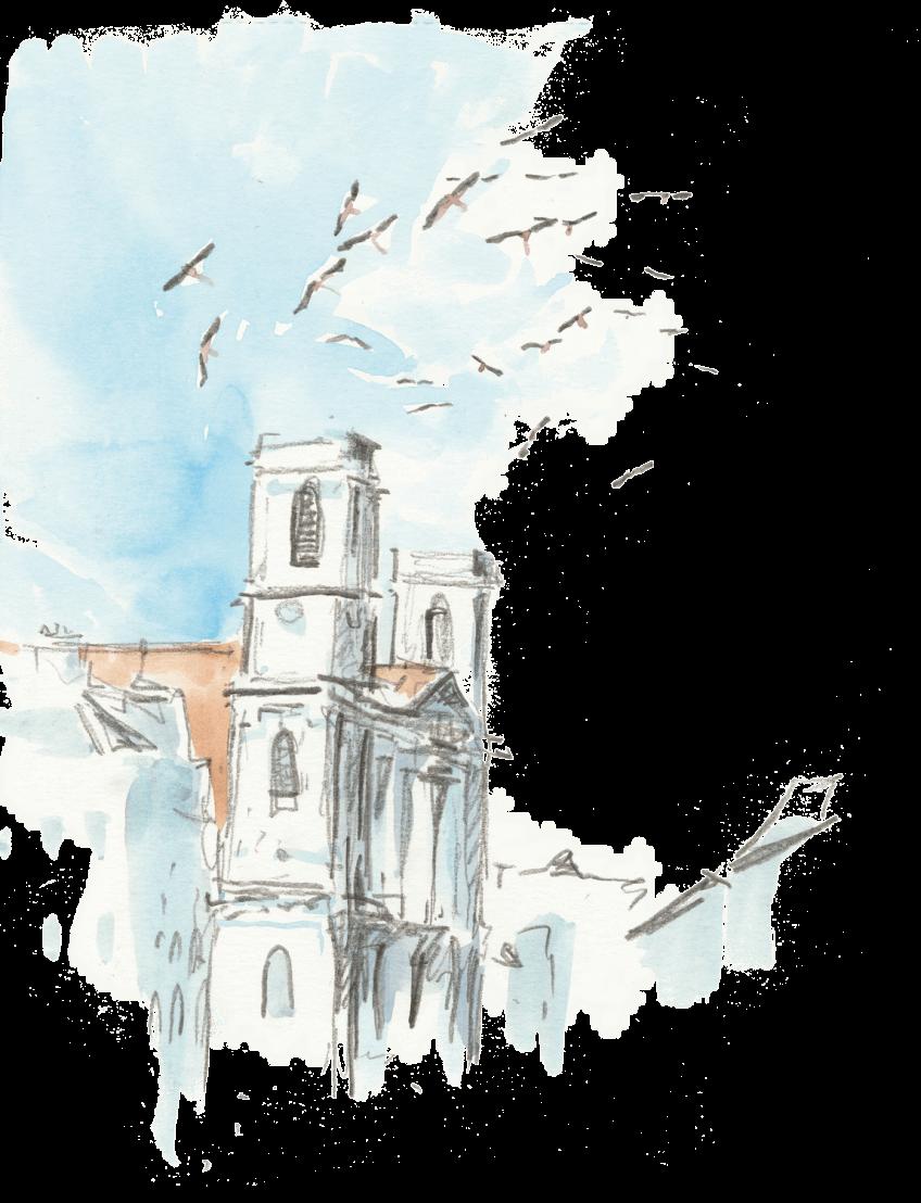 Des cigognes dans la ville de Besançon